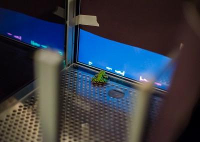 Neurobiology of learning in amphibians
