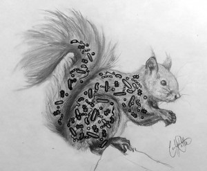Squirrel and microbes